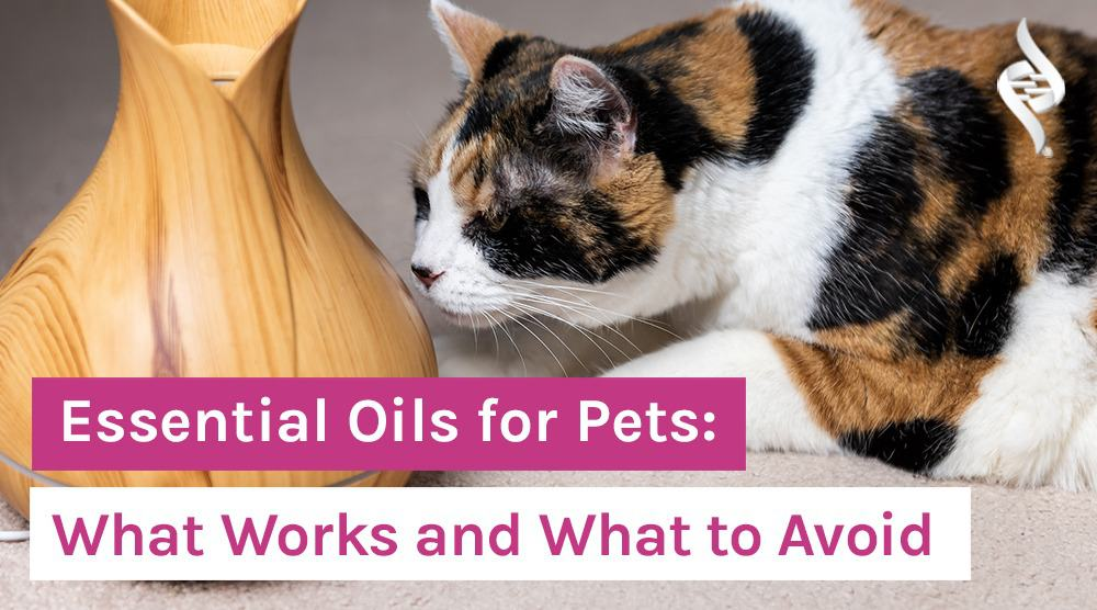 Essential-Oils-for-Pets-What-Works-and-What-to-Avoid