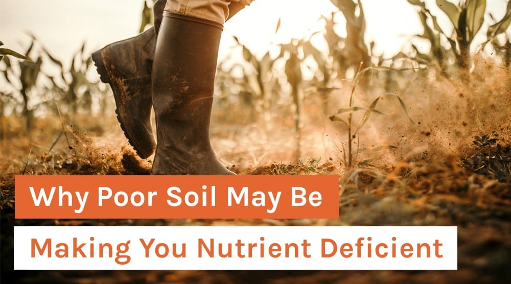 Why Poor Soil May Be Making You Nutrient Deficient