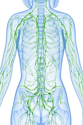 lymphatic-system-of-female-front-with-skeleton