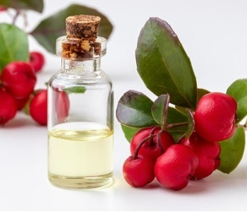 bottle-of-wintergreen-essential-oil-with-fresh-wintergreen-twigs