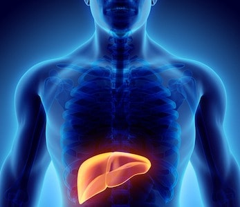 3D illustration of Liver