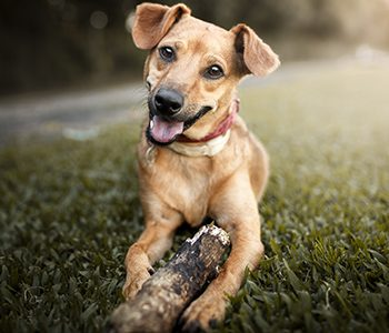 happy healthy dog playing in the grass